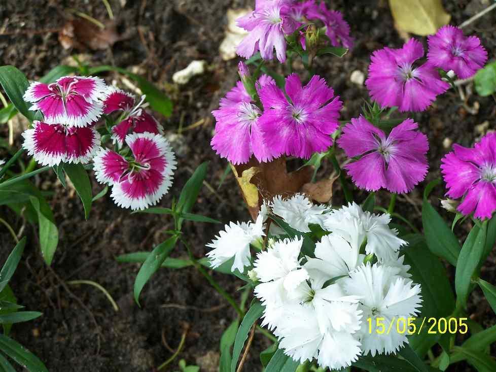Fleurs du jardin for Jardin deluxe fleurs